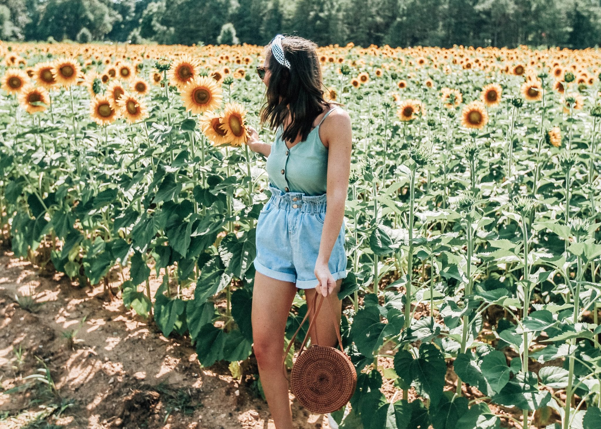 raleigh sunflower field dorothea dix park